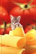 Kitten On Pasta