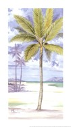 Palm Island II