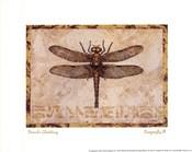 Dragonfly III