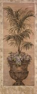 Parlor Palm IV