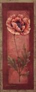 Red Door Poppy
