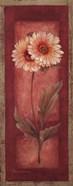 Red Door Gaillardia