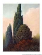 Tuscan Trees I