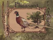 Pheasant