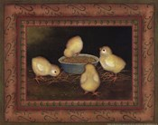 Chicks with Seed