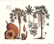 Tropical Fruits I