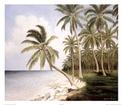 Palm Bay II