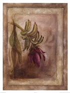 Plantano en Flor I
