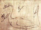 Sepia Swan Study