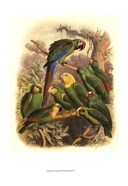 Cassel Tropical Birds I