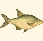 Small Antique Fish I