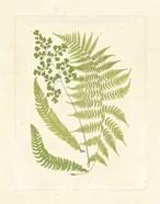 Ferns with Platemark III