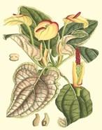 Botanical Fantasy III