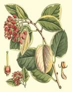 Botanical Fantasy IV