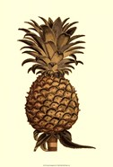 Sepia Pineapple (H) I