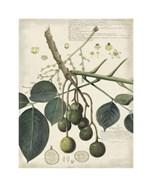 Botanical VI