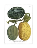 Antique Melons I