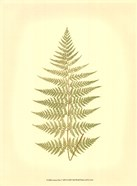 Lowes Fern V (PP)