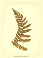 Lowes Fern VI (PP)