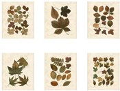 Lodge Leaf Collection