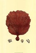 Red Coral (N) II