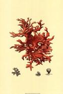 Red Coral (N) III
