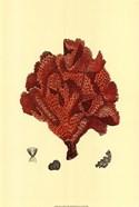 Red Coral (N) IV