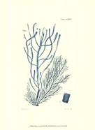 Shades of Aqua III