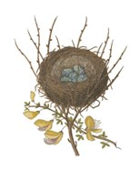 Antique Bird's Nest II