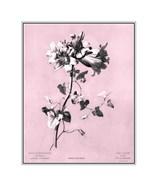 Amaryllis on Pink