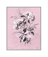 Hydrangea on Pink