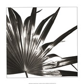 Black and White Palm I