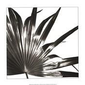 Black and White Palm I