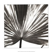 Black and White Palm III