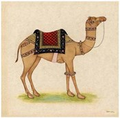 Camel from India I