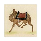 Camel from India I