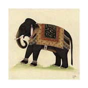 Elephant from India II