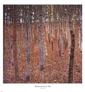 Beechwood Forest, c.1903