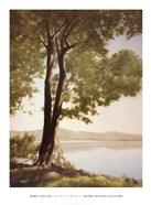 Sunlit Trees I