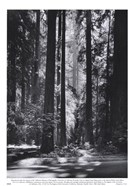 Redwoods, Founders Grove