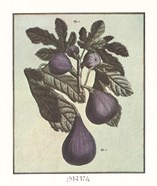 French Fruit Plate/Fig