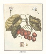 French Fruit Plate/Cherries