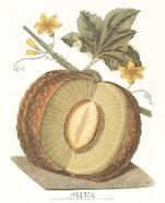 Melon - Sharlyn