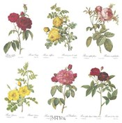 Roses (Set of Six)