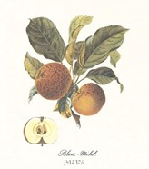 Apple/Blanc-Michel