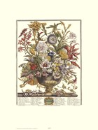 Twelve Months of Flowers, 1730/September