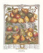 January/Twelve Months of Fruits, 1732