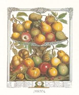 Twelve Months of Fruits, 1732/February