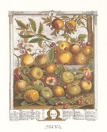 May/Twelve Months of Fruits, 1732