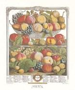September/Twelve Months of Fruits, 1732
